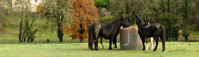 Agri Novatex | Horses feeding with a Winner hay bale