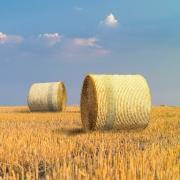 Agri Novatex UK | Easynet bales on field